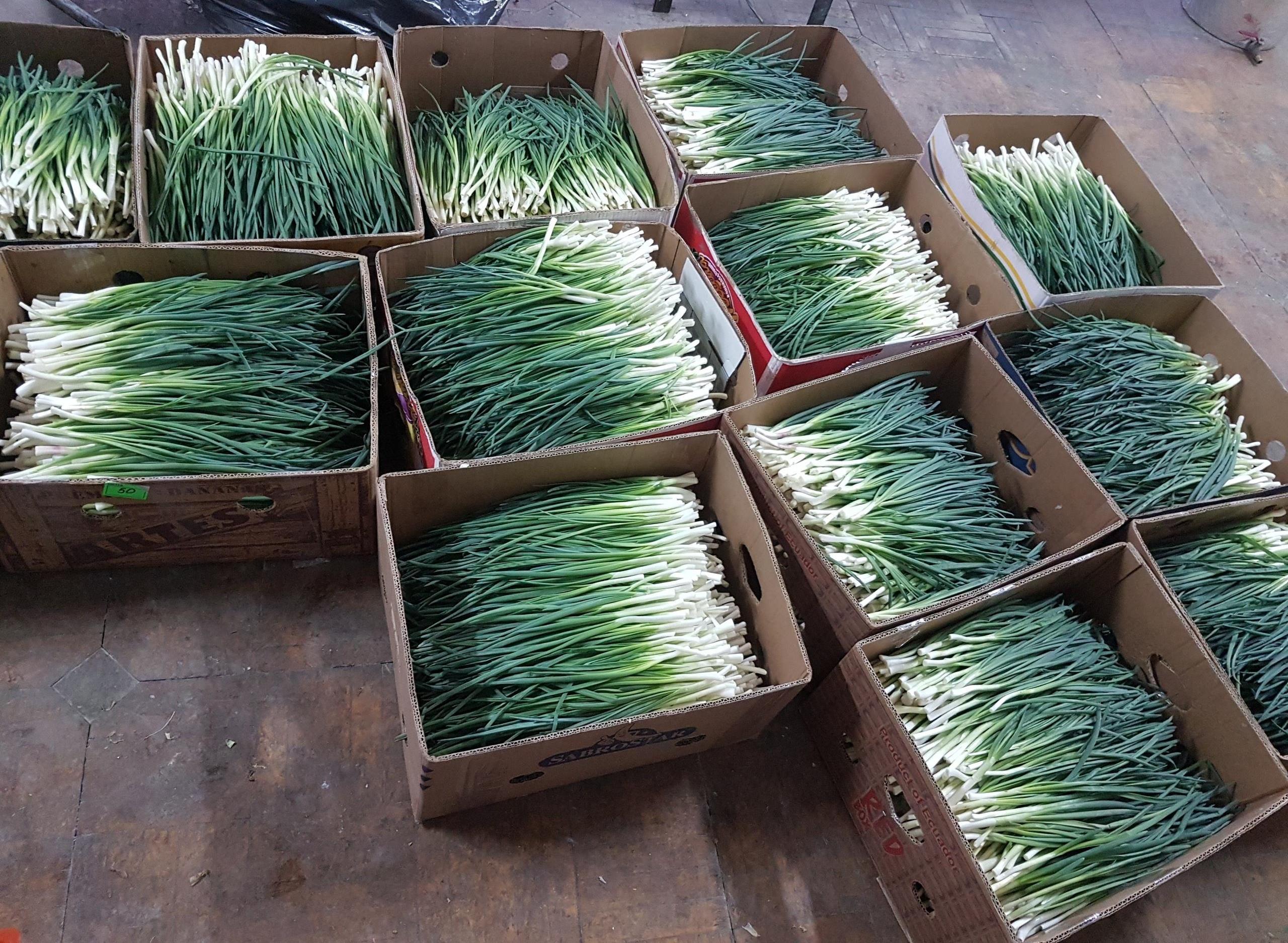Производство лука, пассив без участия