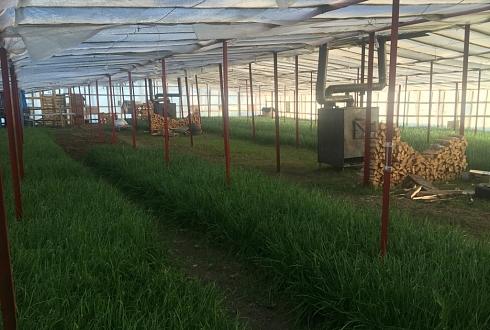 Луковая ферма I Высокая прибыль